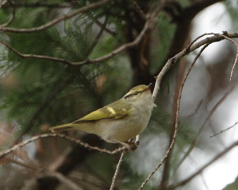 珍鳥は手強い_f0105570_1771676.jpg