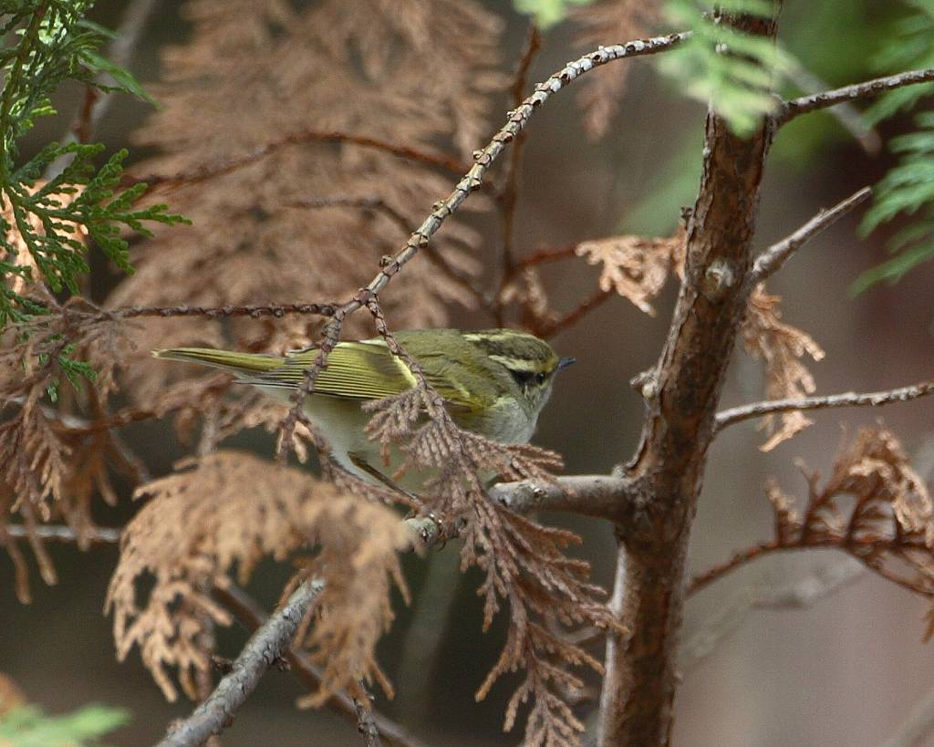 珍鳥は手強い_f0105570_1773435.jpg