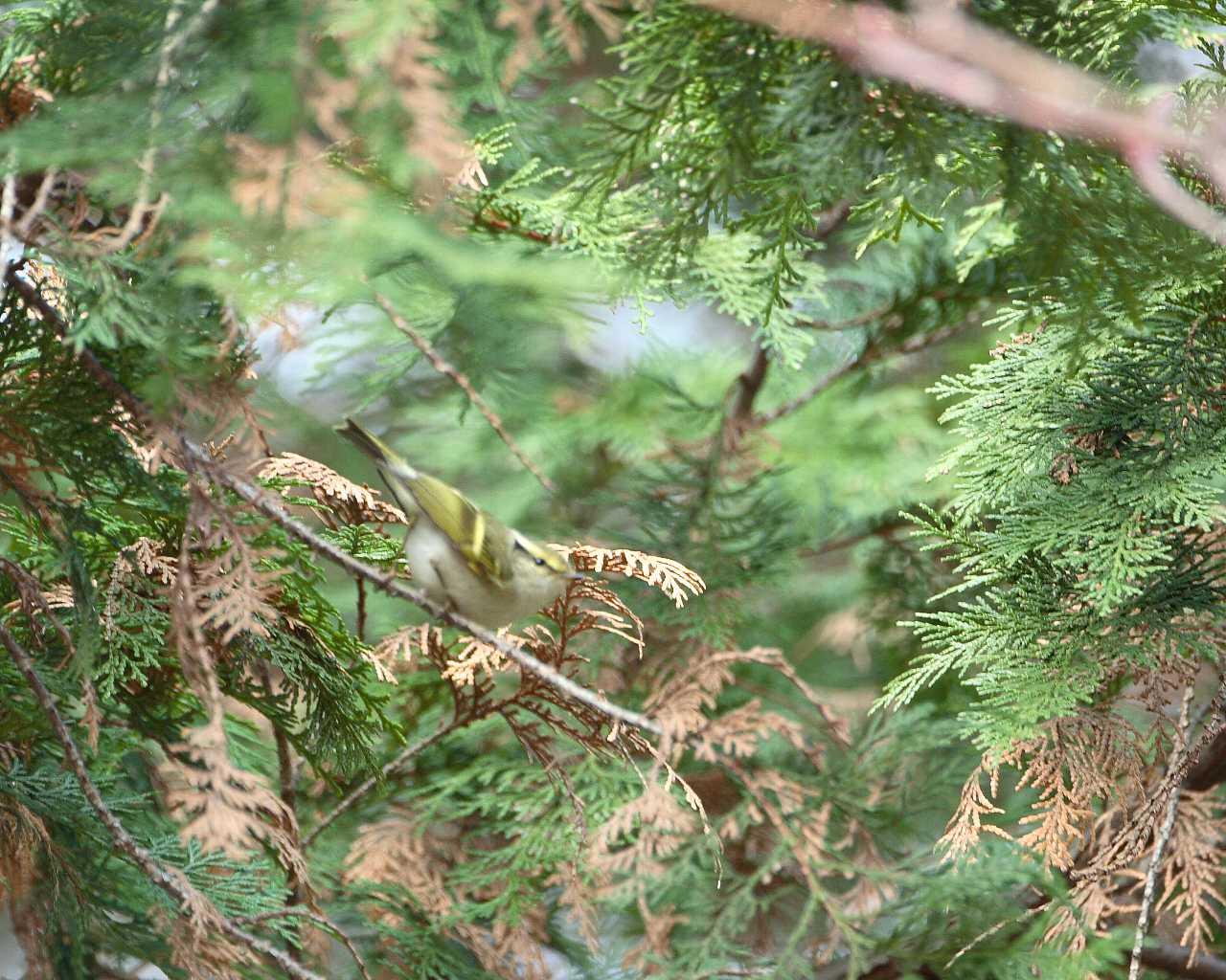 珍鳥は手強い_f0105570_1775577.jpg