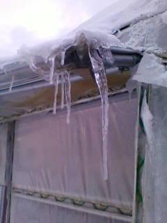 寒い!_d0026905_9383671.jpg
