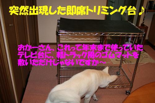 f0121712_1421324.jpg