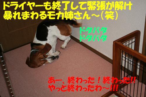 f0121712_1432313.jpg