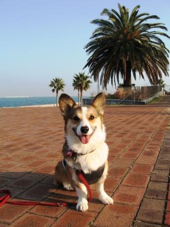 海の近くのドッグラン ~城南島海浜公園_f0155118_043111.jpg