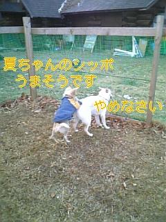 f0148927_18465432.jpg
