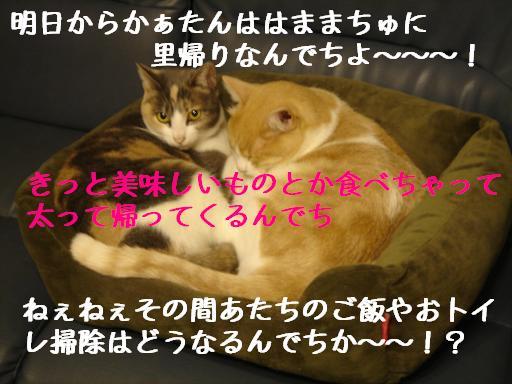 f0131535_12263773.jpg
