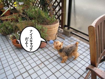 """キャッチ出来たよ♪"""""""
