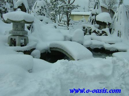 雪・雪・過去!?_d0141049_23452445.jpg