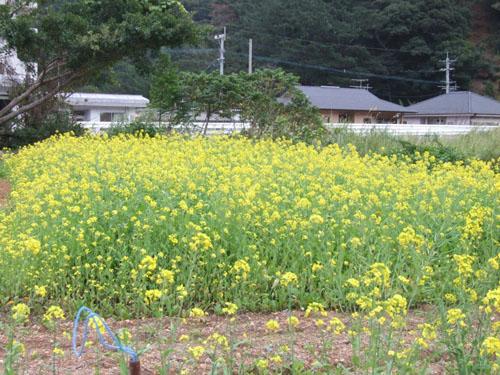 春~♪_e0028387_2352154.jpg