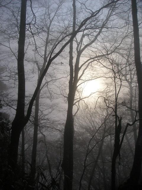 丹沢山稜 山歩記(やまあるき) 2日目 檜洞丸_f0110366_2212116.jpg