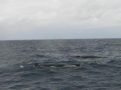 久米島 波とクジラ_f0108797_1693797.jpg