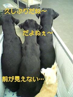 f0148927_20332277.jpg