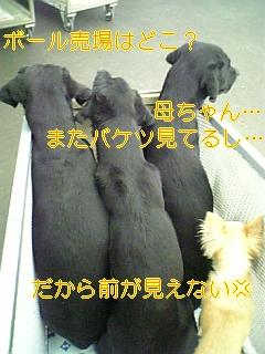 f0148927_20334873.jpg