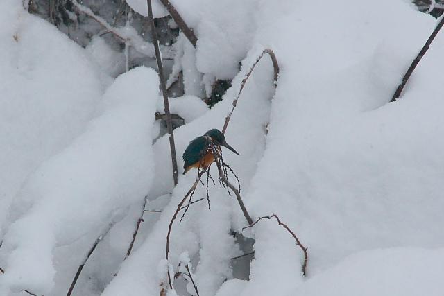 雪のベッドで3時間_d0089287_1114459.jpg