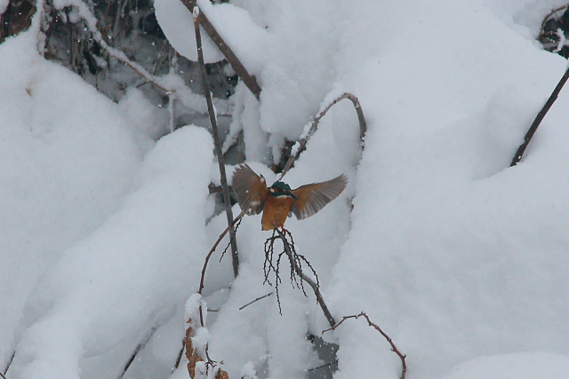 雪のベッドで3時間_d0089287_11145014.jpg