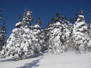 冬_f0105112_10342448.jpg