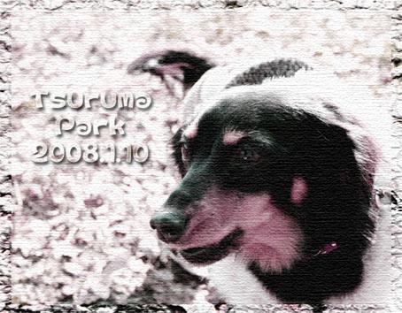 f0118627_21402062.jpg