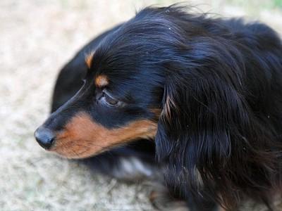 お庭警備犬
