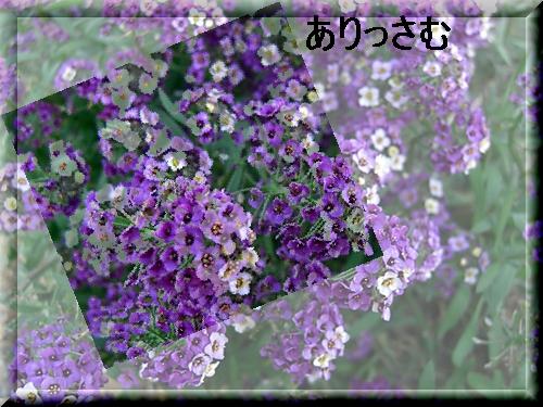 f0031546_8384693.jpg