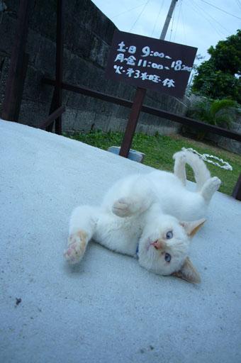 ad cat._c0153966_23353641.jpg