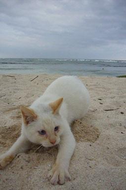 ad cat._c0153966_23363195.jpg