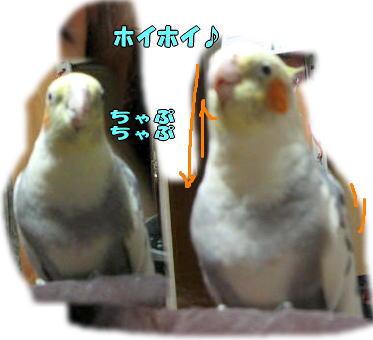 f0082367_1532141.jpg