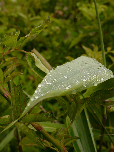 876 朝靄に包まれて #4/ 雨滴 #11_c0001773_126012.jpg