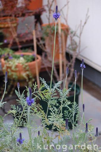 季節はずれの花_e0119151_153438.jpg