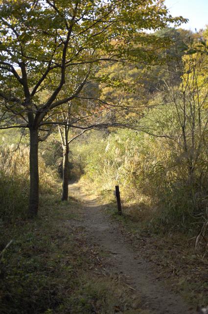 昨年秋に神戸にお邪魔させて頂き朝の散歩の帰り道です。細い小道をトコトコ歩いていると、一本の木がありここで休んでも良いよと言いそうな場所でした。