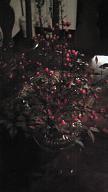 喫茶の花 (なんてん)_f0017696_4325243.jpg