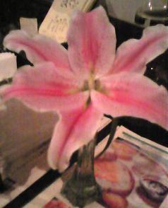 喫茶の花 (カサブランカ)_f0017696_4375692.jpg