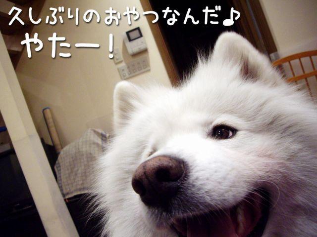 喜び犬_c0062832_15472076.jpg