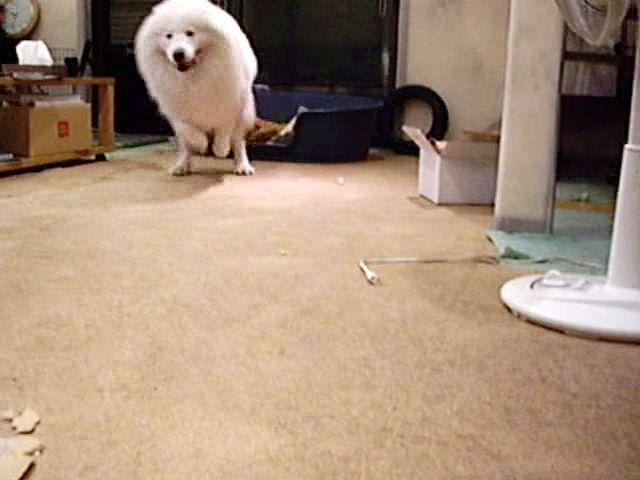 喜び犬_c0062832_15473878.jpg