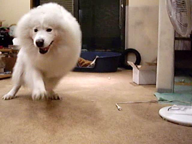 喜び犬_c0062832_15483355.jpg
