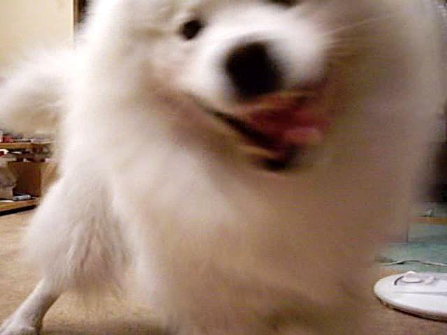 喜び犬_c0062832_15484759.jpg