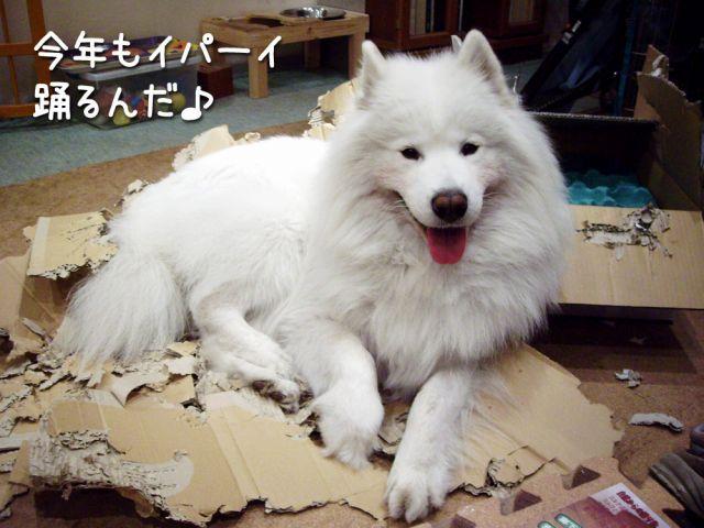 喜び犬_c0062832_15491220.jpg