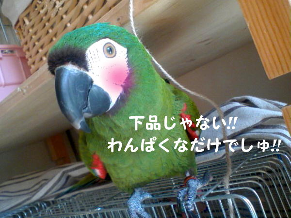 f0132055_23342051.jpg