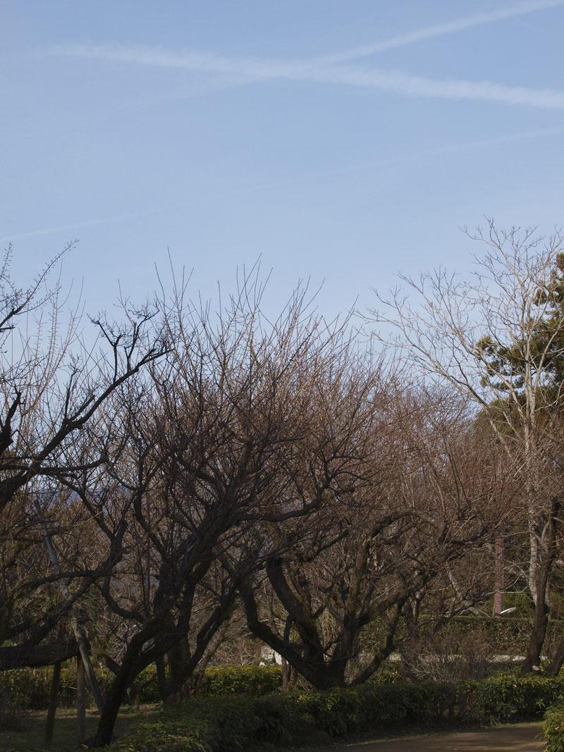 梅はまだか、、、、_d0127876_15444082.jpg