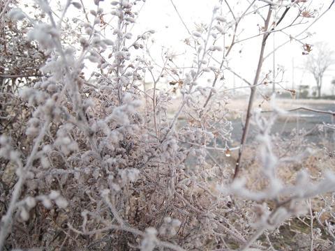 霜夜_f0157387_856352.jpg