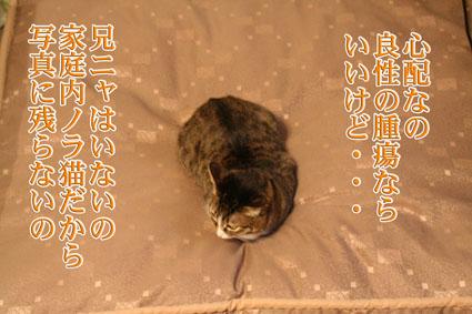 f0101903_20415326.jpg