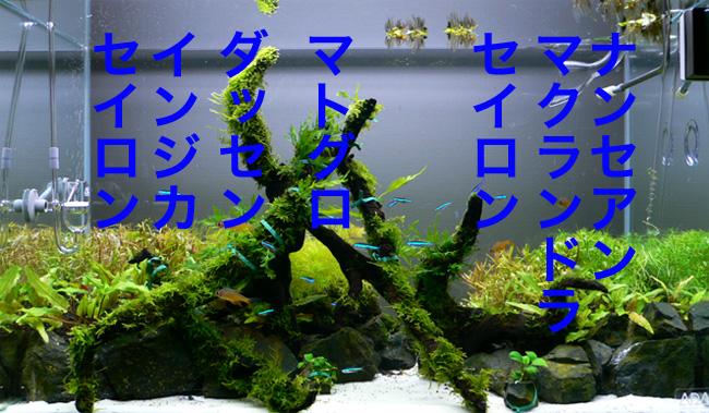 d0042049_22542326.jpg