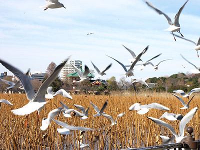 上野公園~国際子ども図書館_b0006870_1848153.jpg