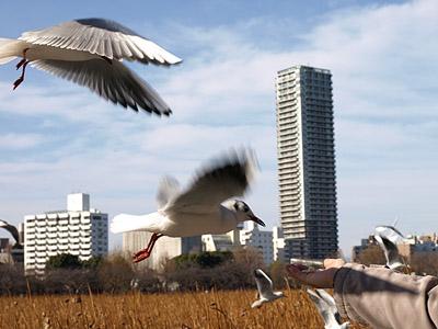 上野公園~国際子ども図書館_b0006870_18491570.jpg
