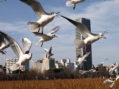 上野公園~国際子ども図書館_b0006870_18494229.jpg