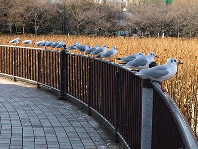 上野公園~国際子ども図書館_b0006870_1850267.jpg