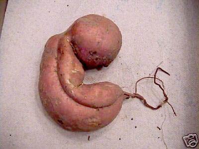 胎児のような野菜