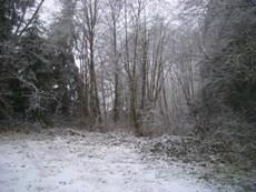 雪です。_d0145899_15201131.jpg