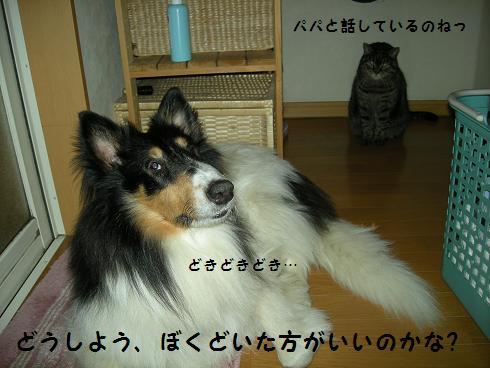 f0081100_22533482.jpg