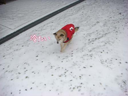 ちょっとだけの雪_f0064906_17512922.jpg