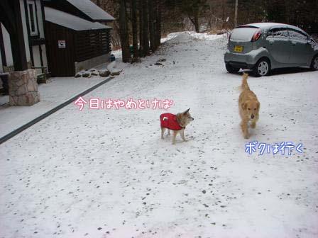 ちょっとだけの雪_f0064906_1755119.jpg