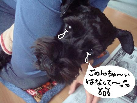 f0141130_1013848.jpg